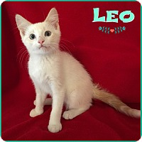 Adopt A Pet :: Leo - Jeffersonville, IN