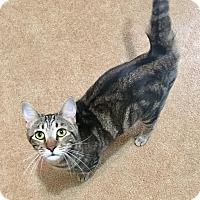 Adopt A Pet :: Joey - Duluth, GA