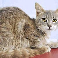 Adopt A Pet :: GWEN - Tavares, FL