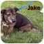 Photo 2 - Labrador Retriever Mix Dog for adoption in Bloomsburg, Pennsylvania - Jake