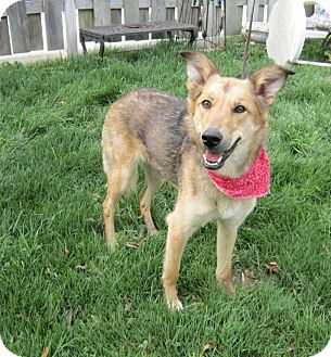 Shepherd (Unknown Type) Mix Dog for adoption in Ile-Perrot, Quebec - Darling