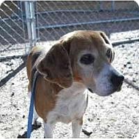 Adopt A Pet :: Addie - Phoenix, AZ