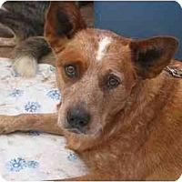 Adopt A Pet :: Rio *Adoption Pending* - Phoenix, AZ