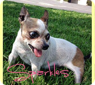 Chihuahua Dog for adoption in Creston, California - Sparkles