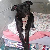 Adopt A Pet :: Princess - Franklin, NH