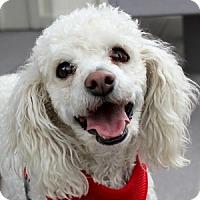Adopt A Pet :: Jake - La Costa, CA