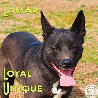 Shepherd (Unknown Type)/Border Collie Mix Dog for adoption in Washburn, Missouri - Lamar