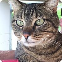 Adopt A Pet :: TC - Chattanooga, TN