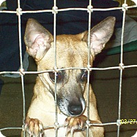 Adopt A Pet :: Baby - Mexia, TX