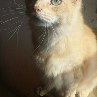 Adopt A Pet :: Hansel - So Sweet! - Quentin, PA