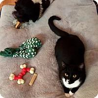 Adopt A Pet :: Kitty - Delray Beach, FL