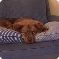 Adopt A Pet :: YOGI - Murrells Inlet, SC