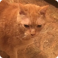 Adopt A Pet :: Tigger (COURTESY POST) - Baltimore, MD