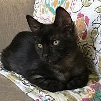 Adopt A Pet :: Eric Claption & Patty - Orange, CA