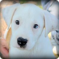 Adopt A Pet :: Finn~adopted! - Glastonbury, CT