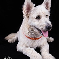 Adopt A Pet :: Mowgli - Lodi, CA