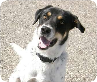 Australian Cattle Dog/German Shepherd Dog Mix Dog for adoption in Meridian, Idaho - Happy