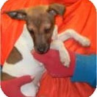 Adopt A Pet :: Brio ADOPTED!! - Antioch, IL