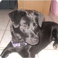 Adopt A Pet :: Kia - New Boston, NH