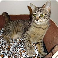 Domestic Shorthair Cat for adoption in Atlanta, Georgia - Winnie