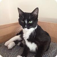 Adopt A Pet :: Noel and Whisper - Portland, ME
