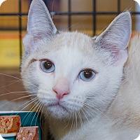 Adopt A Pet :: Elias - Irvine, CA