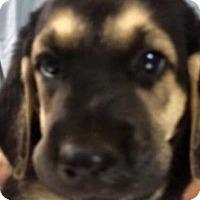 Adopt A Pet :: Howard - Barnegat, NJ