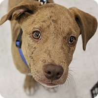 Adopt A Pet :: Bailey - Lakeville, MN