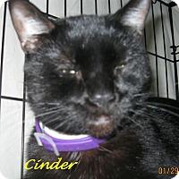 Adopt A Pet :: Cinder - Chisholm, MN