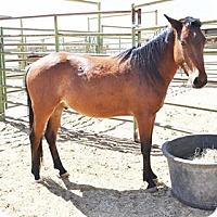 Adopt A Pet :: Eyota - Lancaster, CA