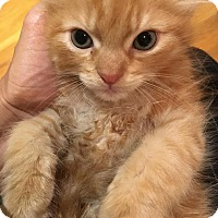 Adopt A Pet :: Slinky - River Edge, NJ
