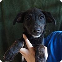 Adopt A Pet :: Wrigley - Oviedo, FL
