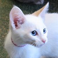 Adopt A Pet :: Alia - Gonzales, TX