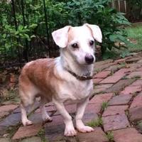 Adopt A Pet :: Sal - Dover, DE