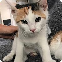Adopt A Pet :: Clover - Lambertville, NJ