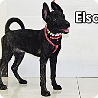 Adopt A Pet :: Elsa Ho - Seattle, WA