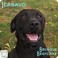 Adopt A Pet :: Icabaud - Washburn, MO