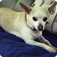 Adopt A Pet :: Stevie - Virginia Beach, VA