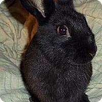 Adopt A Pet :: Amanda - Santee, CA