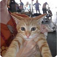 Adopt A Pet :: Rowan - Warren, MI