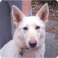 Adopt A Pet :: Nina - Conyers, GA