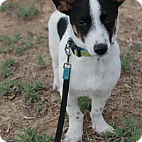 Adopt A Pet :: Oreo - Fountain, CO