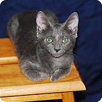 Adopt A Pet :: Contessa - Phoenix, AZ