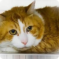 Adopt A Pet :: Chuckie - Webster, MA
