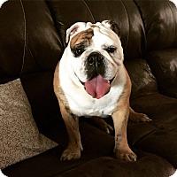 Adopt A Pet :: Sofia - Odessa, FL