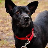 Adopt A Pet :: MIA - Palm City, FL