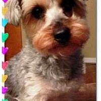 Adopt A Pet :: Max - Kalamazoo, MI