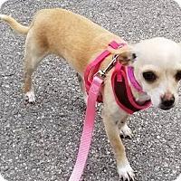 Adopt A Pet :: Lotus - San Antonio, TX