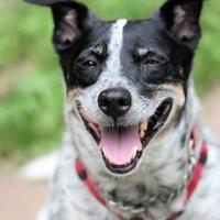 Adopt A Pet :: Snoopy - Hastings, MN