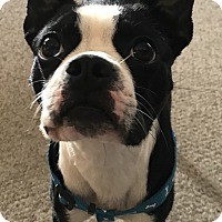 Adopt A Pet :: Marshall - Jackson, TN
